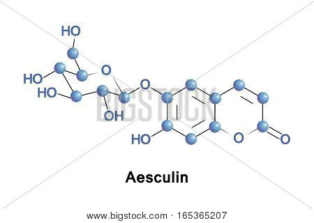 Aesculin is a coumarin glucoside that naturally occurs in the horse chestnut, California buckeye, Prickly Box and in daphnin. It is also found in dandelion coffee.