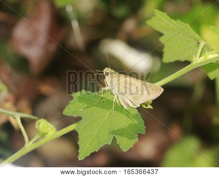 Little brown moth on top of a plant leaf