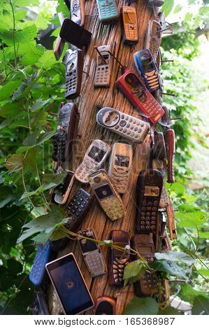 Old mobile phones nailed to a trunk. The severely damaged mobile phones are covered in spider webs