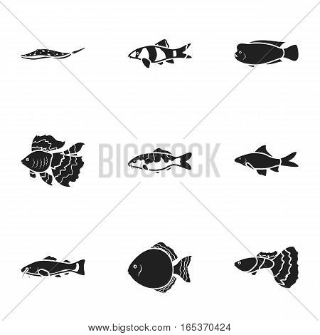 Aquarium fish set icons in black style. Big collection of aquarium fish vector symbol stock