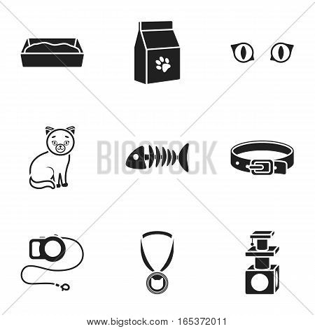 Cat equipment set icons in black style. Big collection of cat equipment vector symbol stock