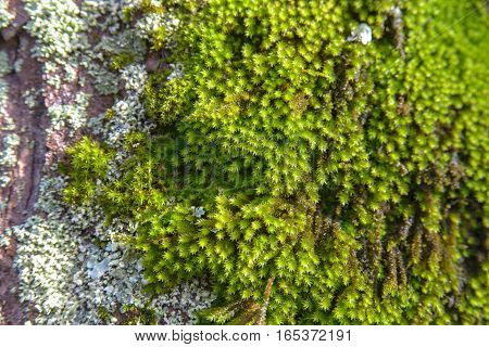 green moss on a big tree. stock photo