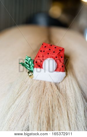 Christmas Decoration on the tail of a Haflinger horse