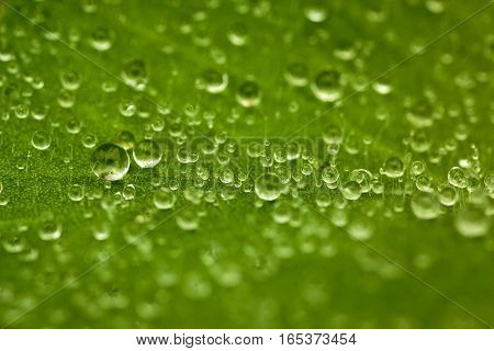 Gotas de rocío en una hoja en la mañana