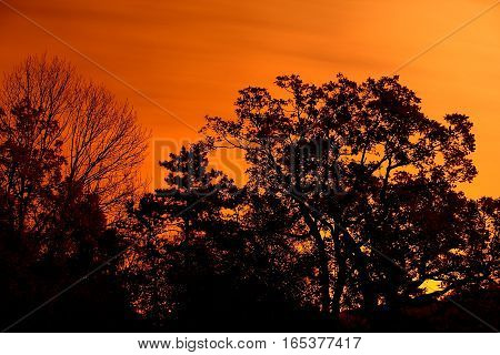 Sunrise - sunset - sundown - silhouette - forest