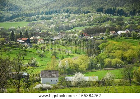 Spring agricultural landscape with all type of blossom trees in garden under the hills