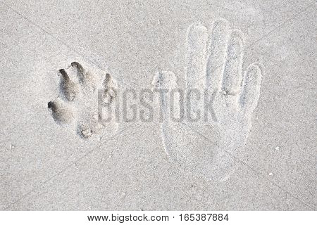 Trace of human hand and dog paw on the sand. Small depth of field