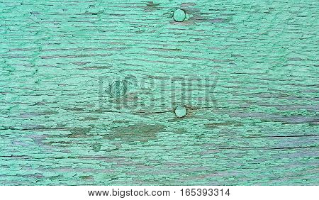 Close-up of old green painted weathered wooden texture with nails