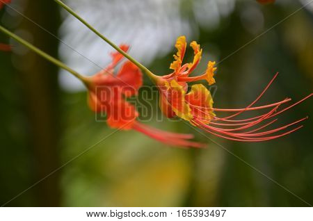 Tropical Exotic Flower Orange Yellow Colorful Plants