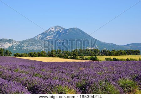 Stunning landscape with lavender field against a foothill of the Alps mountain. Plateau of Valensole Provence France