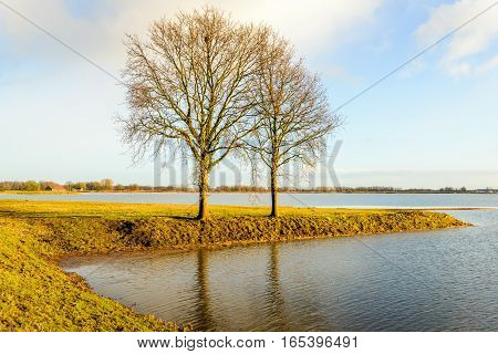Leafless trees in the orange colored late afternoon sunlight in the winter season. The trees are growing in a flooded polder in the Netherlands.