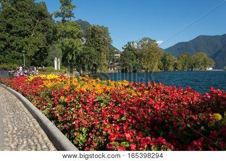 Flowers Near The Lake Of Lugano