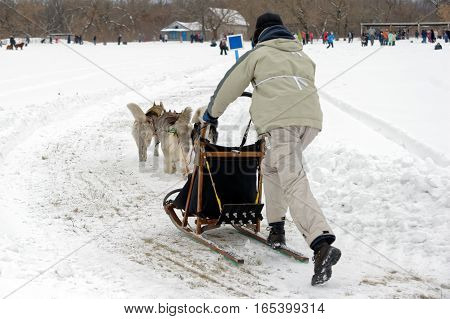 Kharkiv Ukraine - January 14 2017: Musher and his sled team on raceway during the Winter Dog Festival in Kharkiv Oblast Ukraine on January 14 2017