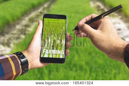 Hand holding smart phone and electronic pen with farming text and up trends income chart on screen over rice field background for Ecology Farming Agriculture business Environment Concept