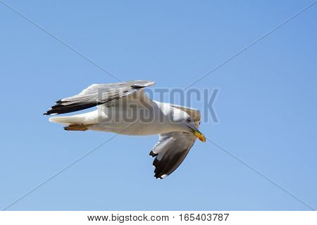 Photo of a bird with blue sky, white colour and sunlight
