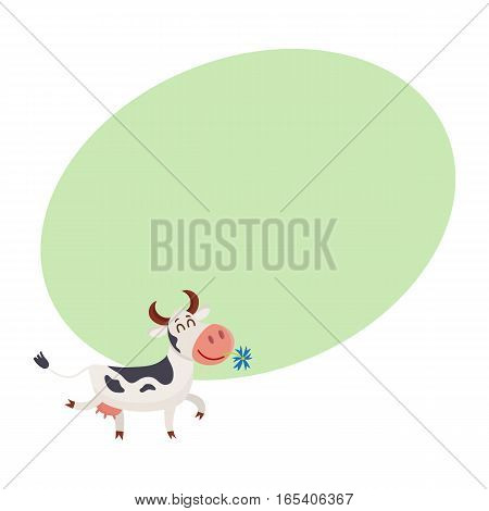 Funny black white spotted cow walking with eyes closed and daisy flower in mouth, cartoon vector illustration on background with place for text. Funny cow holding daisy in mouth, dairy farm concept