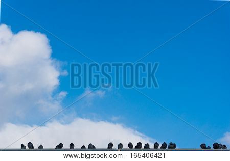 Flock of Pigeons in front of a blue Sky