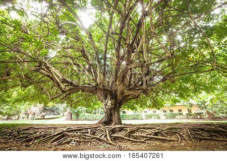 Tree, leaves and roots. Park with grass and trees. natural scene.