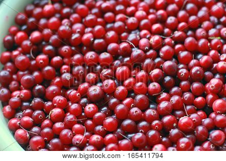 bucket full of ripe red cranberries closeup