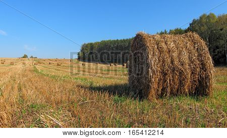 Country landscape, compressed bale of straw after harvesting of grain crops in the field