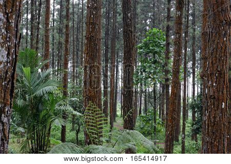 pine forest background,forest background,green background,brown background,tree background