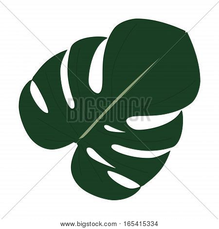 Monstera Leaf Vector