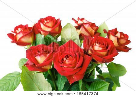 Bunch of red roses in vase on white background