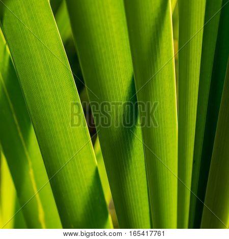 foliage marsh sedge in a sunny day