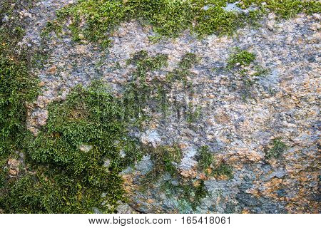 Green moss on the stone. Nature background