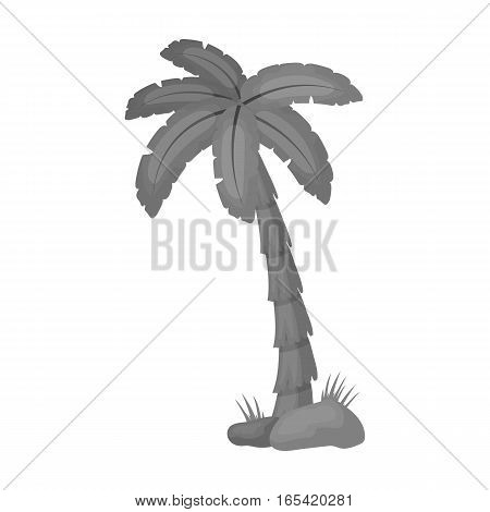 Palm tree icon in monochrome design isolated on white background. Brazil country symbol stock vector illustration.