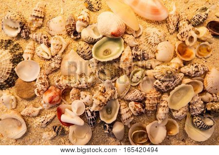 Sand with rocks and shells for a beautiful beach macro effect. From The Turks and Caicos Islands, Caribbean.