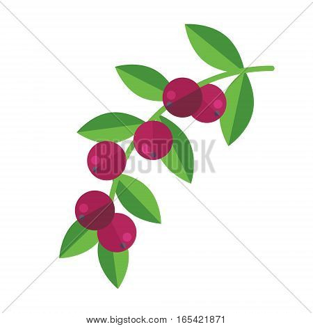 Camu Camu Berries And Leaves Vector Illustration. Superfood Camucamu Or Cacari Icon. Healthy Detox N