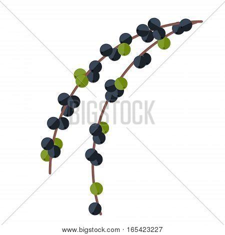 Acai Berries And Leaves Vector Illustration. Superfood Euterpe Oleracea Icon. Healthy Detox Natural