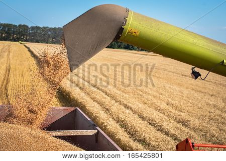 Combine harvester in action on wheat field unloading grains