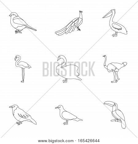 Bird set icons in outline style. Big collection of bird vector symbol stock