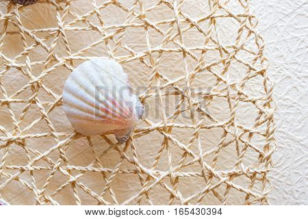 Sea shells and clams on a white woven mesh. Exotic inhabitant of sea and ocean - backdrop for aquarium and interior. Conch shell-pearl on simulated fishing net