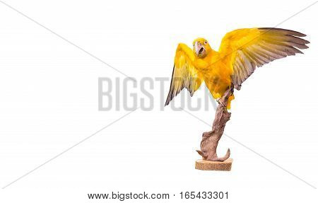 parrot macaw on white background yellow parrot on stump