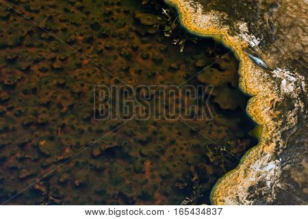 Brown algae grows in the shallow run off water from a YellowStone hot spring.