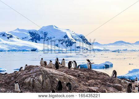 Rocky Coastline Overcrowded By Gentoo Pengins And Glacier With Icebergs In The Background At Neco Ba