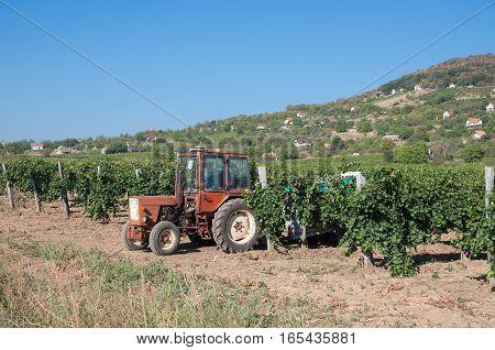 Vineyard Landscape of Badacsony at Lake Balaton,Hungary
