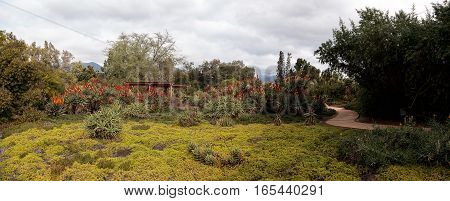 Panoramic desert garden path with red, orange and yellow hot poker succulent flowers in Southern California.