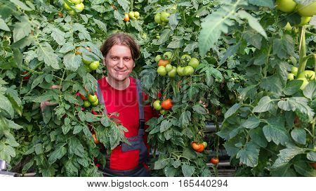 Smiling greenhouse worker standing among tall tomato plants.
