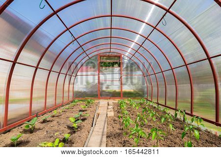 Greenhouse Polycarbonate Inside View