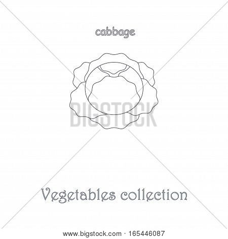Line cabbage icon, vegetables icon collection stock vector illustration