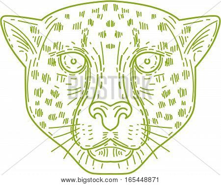 Mono line style illustration of a cheetah head facing front set on isolated white background.