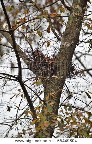vertical bird nest fall winter leaves blue sky