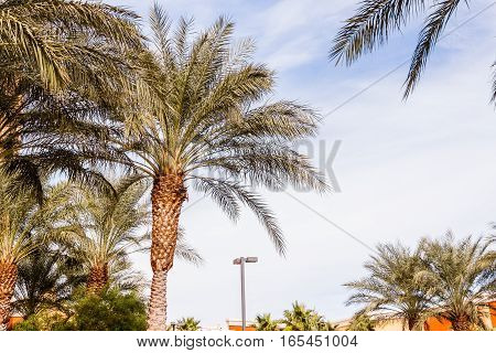Beautiful palm trees over cloud sky background with copy space.