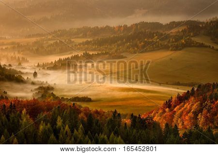 Fog in Pieniny forest hills in sunrise light Slovakia