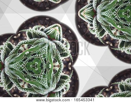 Kaleidoscope repeat design abstract pattern texture background of potted green cactus succulent plant top view