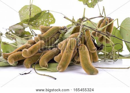 nettles brown pods with on white background (Mucuna pruriens).